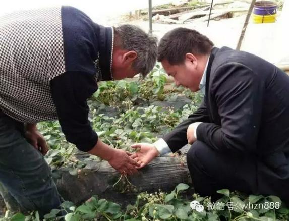 武汉时期为句容白兔草莓节添彩大眼中农主要v时期鱼龙图片